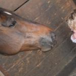 Madita-mit-Pferd